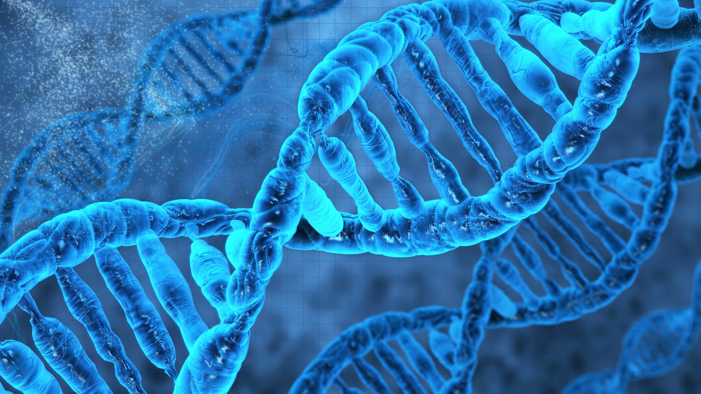 Voorbeelden Hattrick Finance DNA